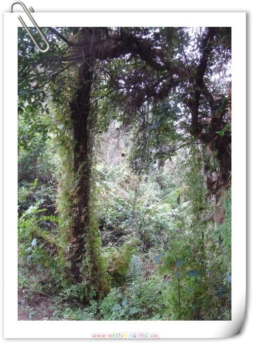 ...谢鲁山庄是我国保存最为完好的四大名庄之一,有