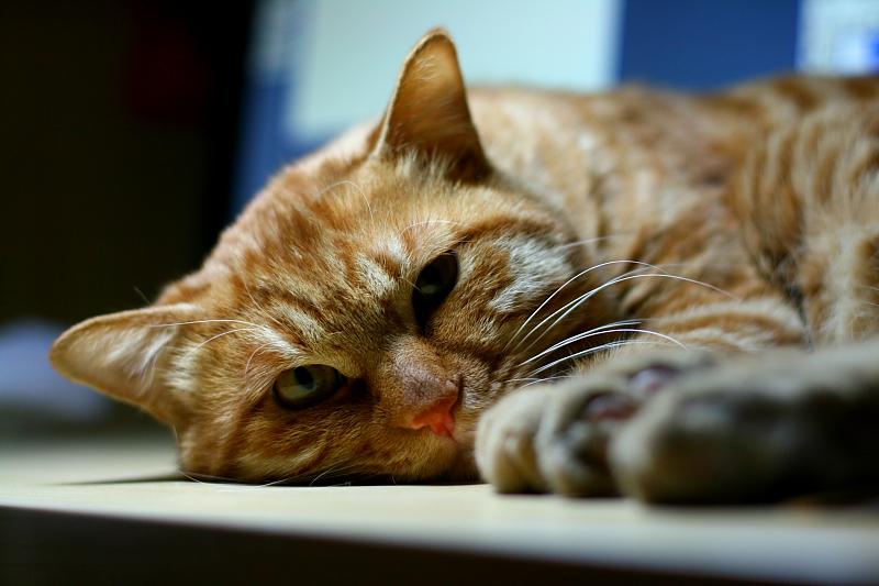 壁纸 动物 猫 猫咪 小猫 桌面 800_533