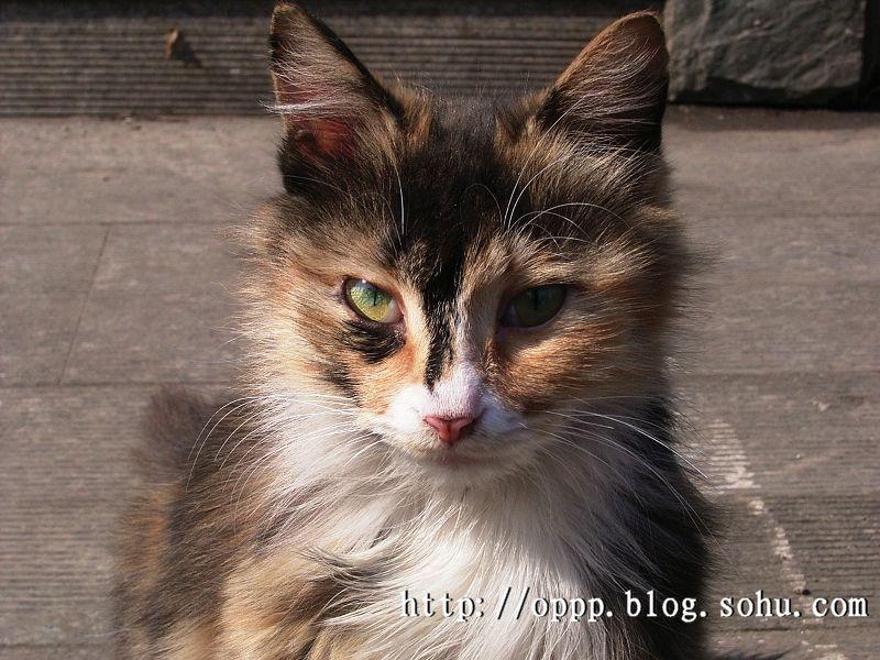 壁纸 动物 狗 狗狗 猫 猫咪 小猫 桌面 800_600