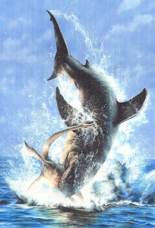 巨齿鲨吃虎鲸视频_巨齿鲨和蓝鲸谁最大-巨齿鲨vs抹香鲸|巨齿鲨吃蓝鲸视频|巨齿鲨比 ...
