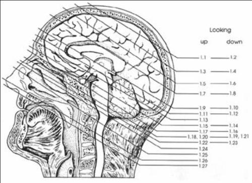 脑磁共振局部解剖与功能图谱