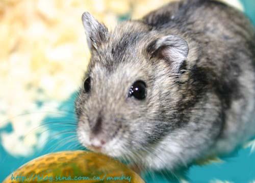 其实老鼠也算是可爱的动物了