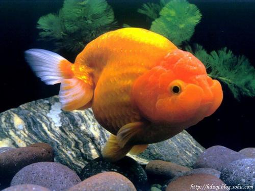 邀您赏鱼 - 梦里水乡 - 15996090026 的博客
