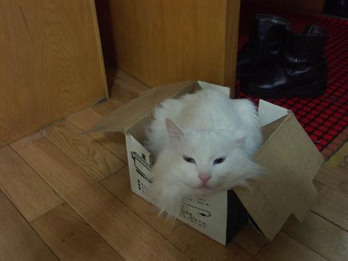 我家里面养了两只大白猫,都已经8岁了,一个叫