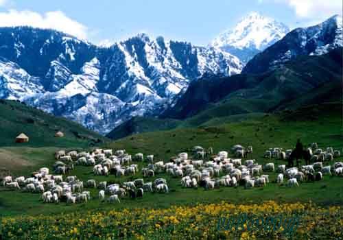 《在那遥远的地方》有三种名称:最早叫《草原情歌》,《我愿作个牧羊
