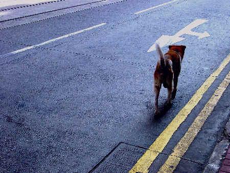 孤独的小狗(图)