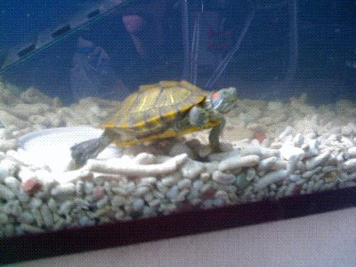 生态龟缸设计图 生态龟 设计图 龟池设计图实景 龟池设计图