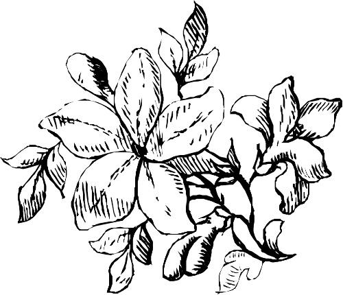 花瓣是一种形状