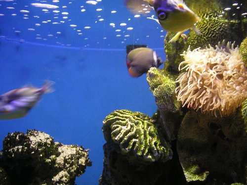 壁纸 海底 海底世界 海洋馆 水族馆 500_374