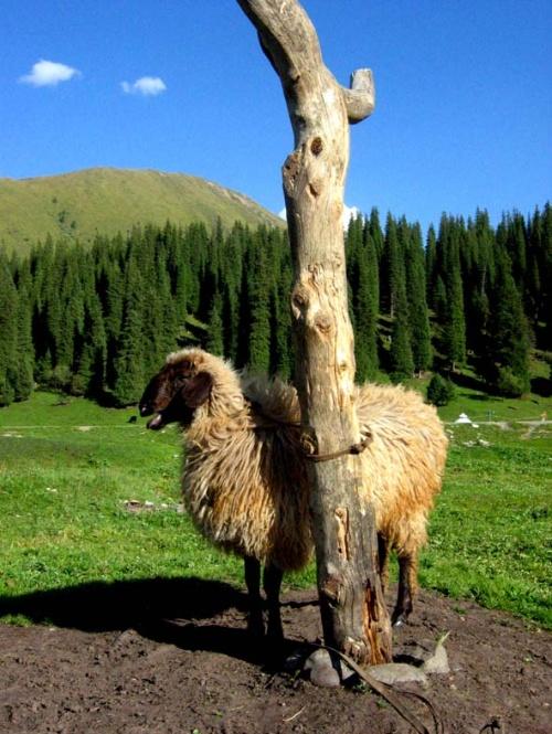 骆驼休息的样子很可爱