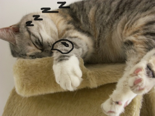 发财猫咪可爱手机壁纸高清