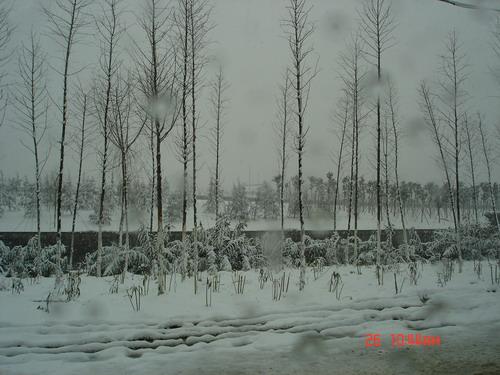 声音,白皑皑的雪地上只留下我和父亲一深一浅的脚印,一直通向学校