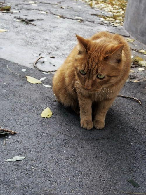 呆萌动物孤独意境