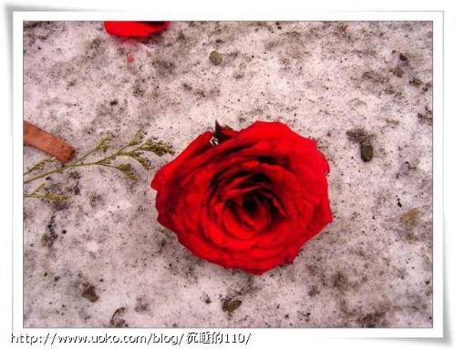 男生qq一只玫瑰配对头像