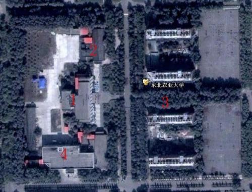 我的母校——东北农业大学(卫星地图)