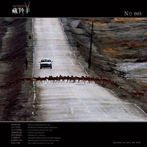 青藏铁路为野生动物开辟生命通道