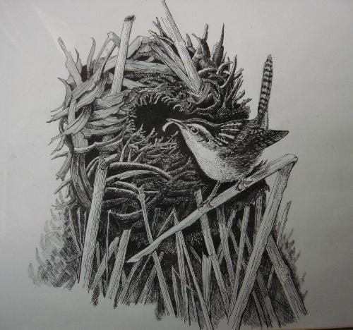 我画的钢笔画:鸟巢(临摹)