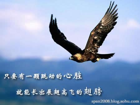 飞翔的翅膀-飞翔的翅膀-我的搜狐