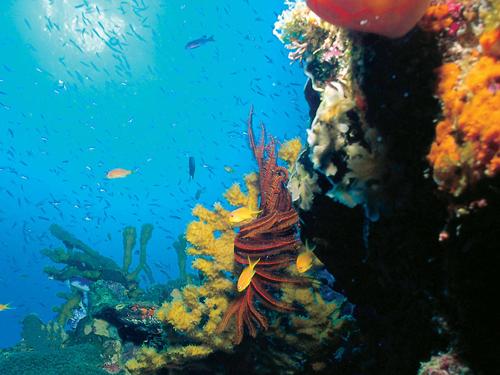 第六名 海洋之心