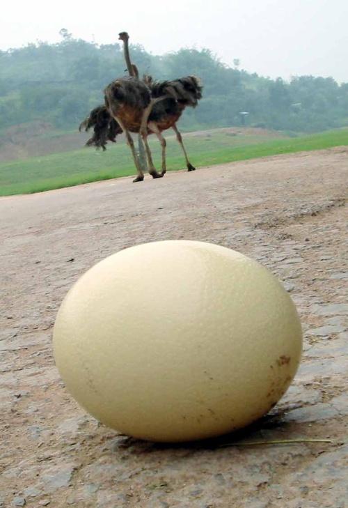哪些动物会生蛋?-小翁&月光宝盒-搜狐博客