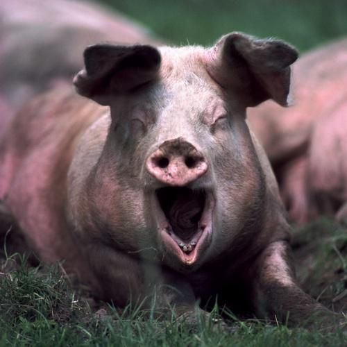 让我做一只特立独行的猪,带你去流浪
